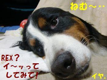 寝てんのに邪魔しないの~!!