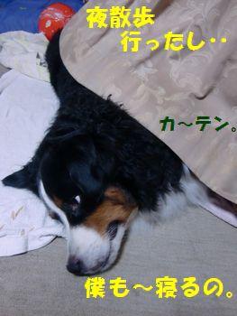 お散歩すんだし眠る~。
