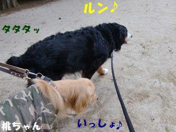 一緒に歩くの~!!