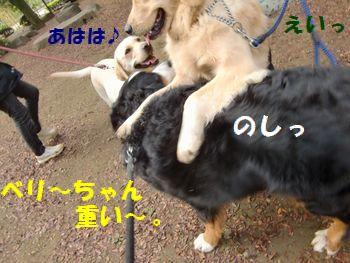 ベリーちゃん載ってきた~!