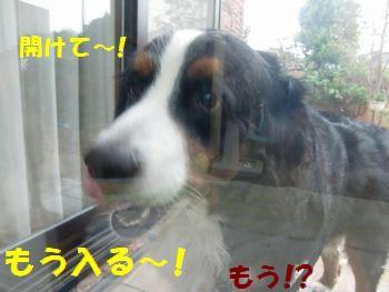早く開けてよ~!!雨なんだよ!