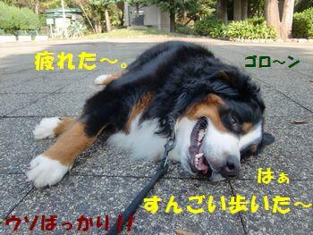 すんごい疲れたの!