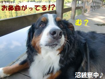 お鼻が曲がってる~!?