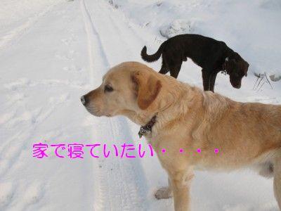 IMG_0049_20100328221512.jpg