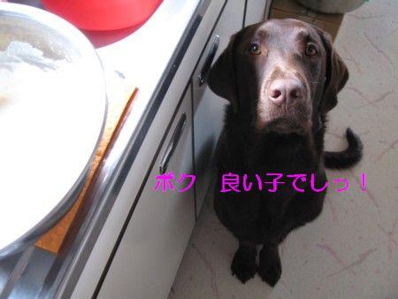 IMG_0069_20100207215011.jpg