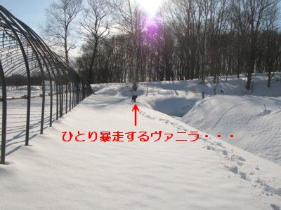 IMG_0131_20100126133938.jpg