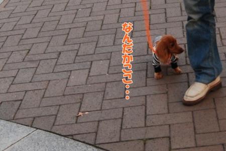0325_20091111124108.jpg