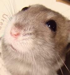 hamster268-_20091125112603.jpg