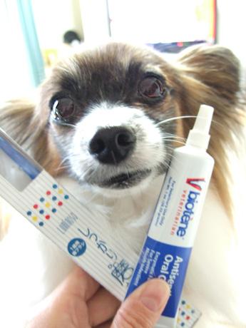 歯磨き頑張る隊