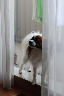 窓際がお好き