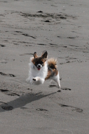 砂浜大好き