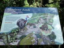 rainforest tour (4)