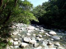 rainforest tour (3)