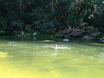 rainforest tour (6)