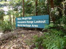 rainforest tour (16)