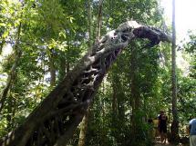 rainforest tour (23)