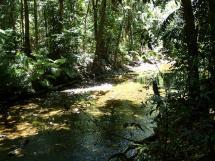 rainforest tour (21)