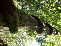 rainforest tour (28)