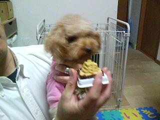 ココア様誕生日2歳ー1