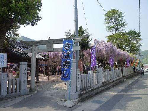 大歳神社の千年藤