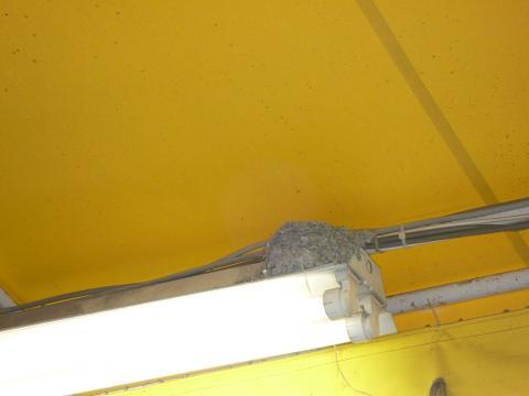燕の巣201007