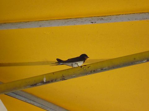 燕の巣201007-2