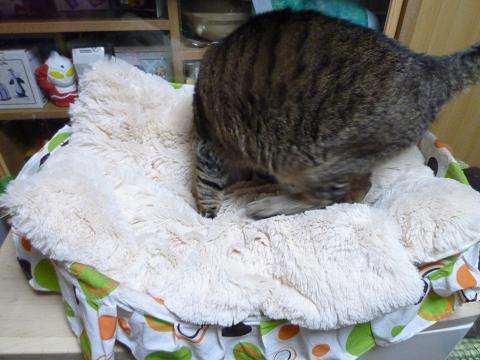 新猫ベッド2