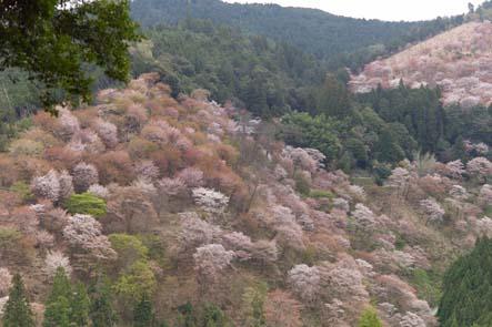 吉野山全山