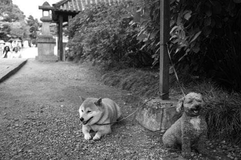 矢田寺 犬
