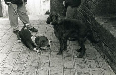 モンサンミッシェル 犬