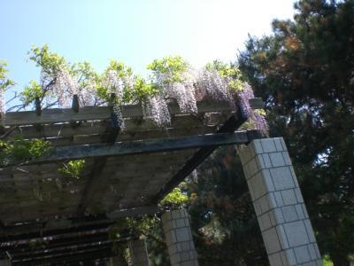 6月の森林公園6