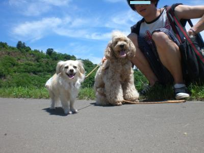 6月の五天山公園5