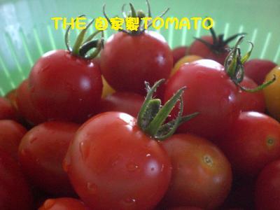 自家製トマトさん