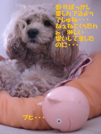 CIMG0835.jpg