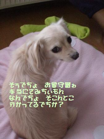 CIMG0843.jpg