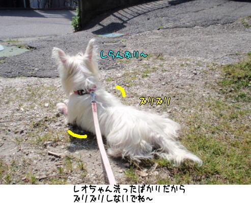 image220410a.jpg