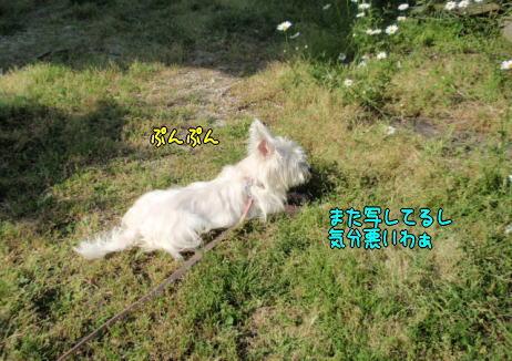 image220509b.jpg
