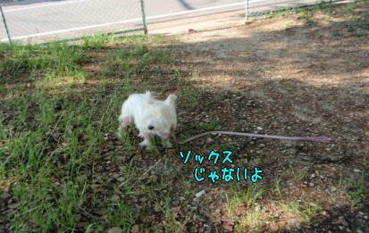 image220606.jpg