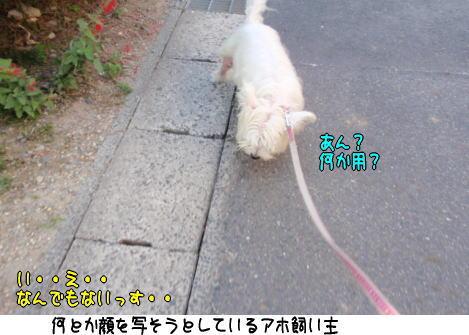 image220612.jpg