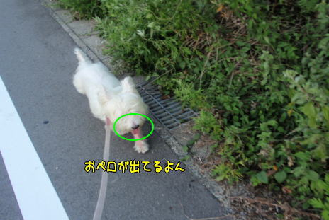image220831.jpg