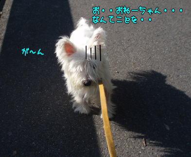image221207.jpg