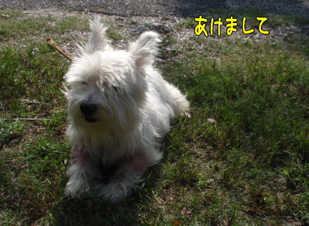 image230101.jpg