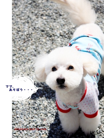 11_20120407143323.jpg