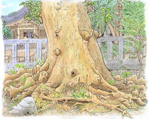 新島 十三社神社の木