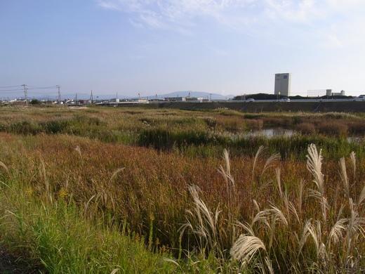 アクアプラザ遊水地 - 2009/10下旬