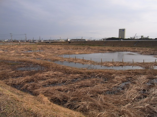 アクアプラザ遊水地 - 2010/03上旬