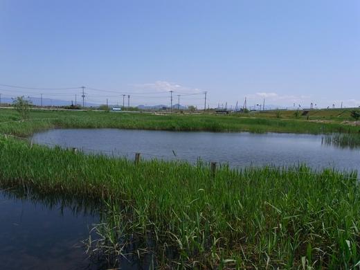 アクアプラザ遊水地