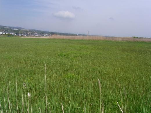 ノウルシが生えていた田んぼの一角