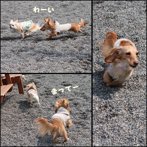 ロコ走る2