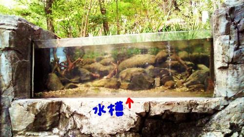 公園の水槽3☆